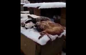 В деревне Коляново неизвестное существо напало на кроличье хозяйство
