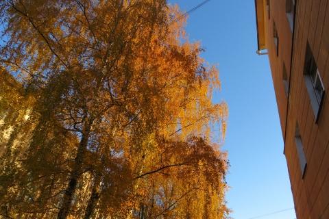 13 октября довольно теплая для осени погода в Ивановской области сохранится.