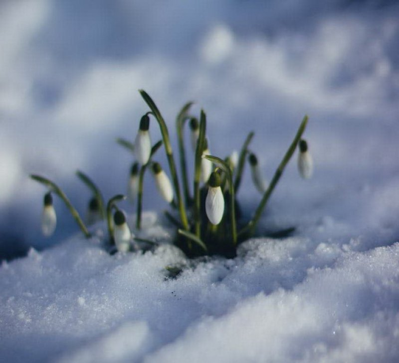 Синоптики рассказали, какую погоду ждать в марте