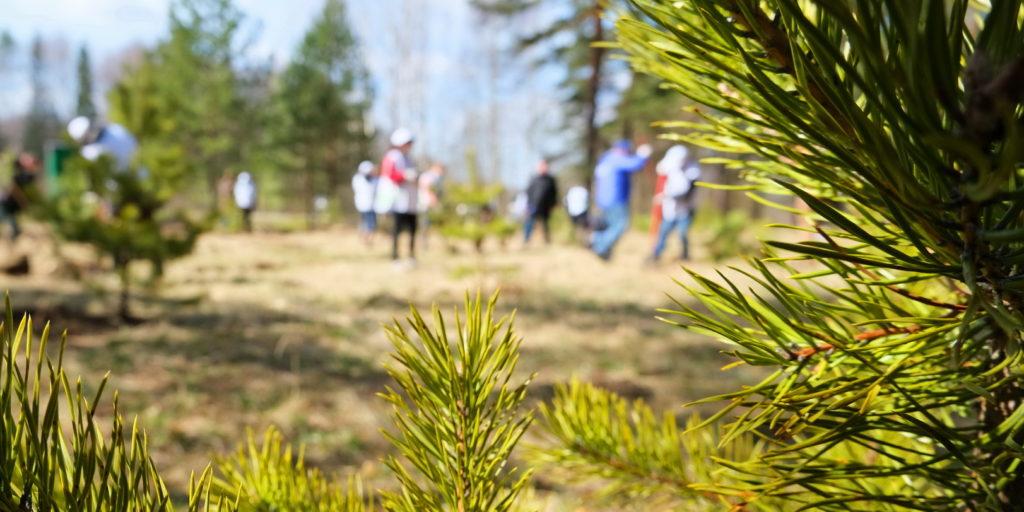 В Ивановской области полностью выполнен план по искусственному восстановлению лесов